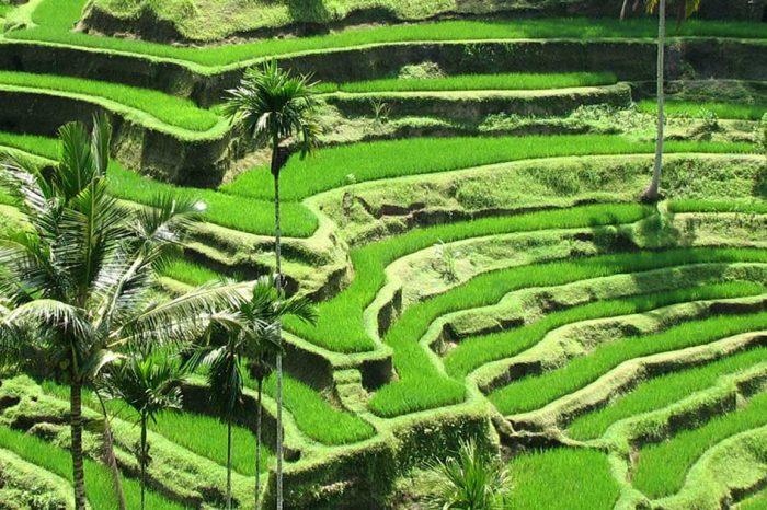 Excursions autour d'Ubud